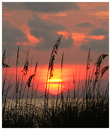 Beach Grass and Sunset
